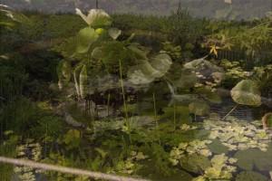 L'étang rêvé