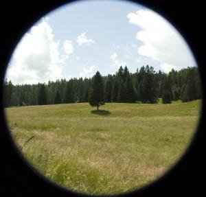 Nous nous sommes fixées ensuite sur un paysage du Vercors, le thème : l'arbre