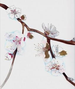 Fleurs d'abricotier, détail