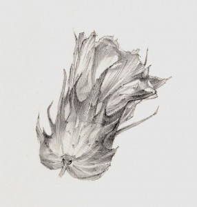 Fleur de coton, mine graphite