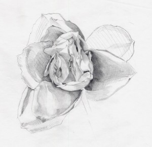 rose blanche, mine graphite