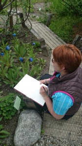 dessin précis sur le vif, à la loupe pour une planche botanique