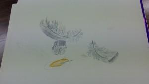 plumes en cours