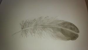 plume de cygne