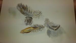 Les plumes de Renée
