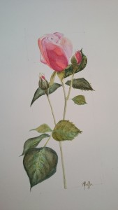 la rose d'Alixe