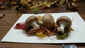 Modèle champignons