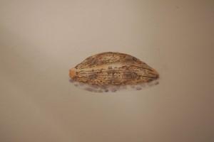 Un coquillage