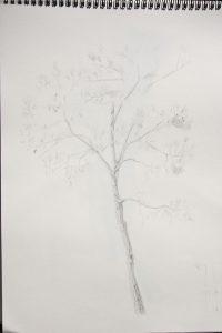 Étude d'un arbre